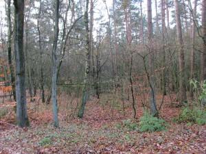 Ziet u door de bomen het bos van de Basis GGZ niet meer?